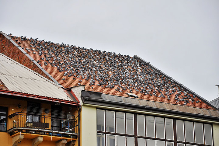 A2B Pest Control are able to install spikes to deter birds from roofs in Brixton.