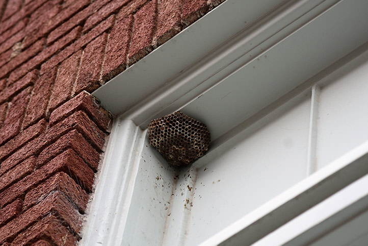 We provide a wasp nest removal service for domestic and commercial properties in Brixton.